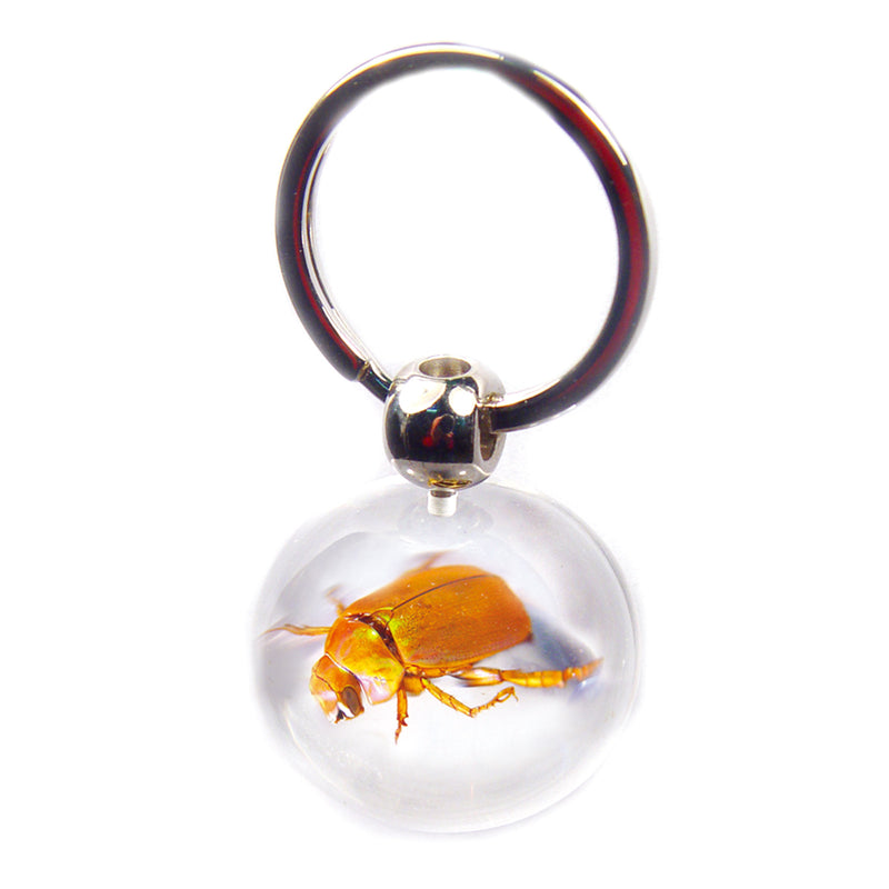 Beetle Key Chain Clear Round (SK708)