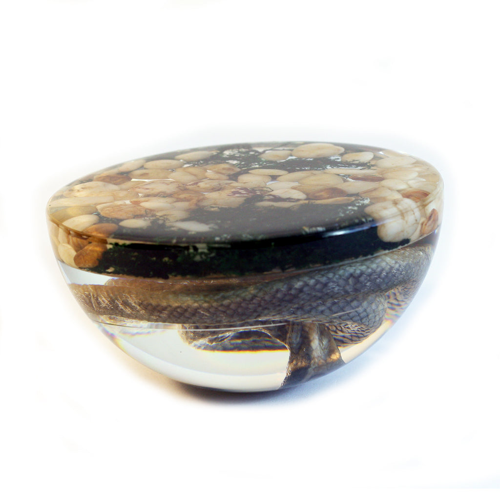 SS113<br /> 4 inch Real Snake Dome Paperweight Decoration