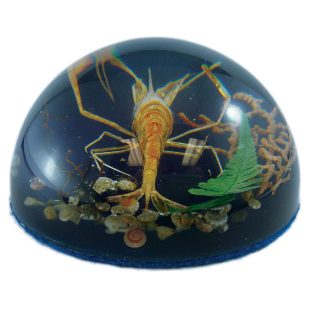Shrimp Dome Paperweight (SS232)