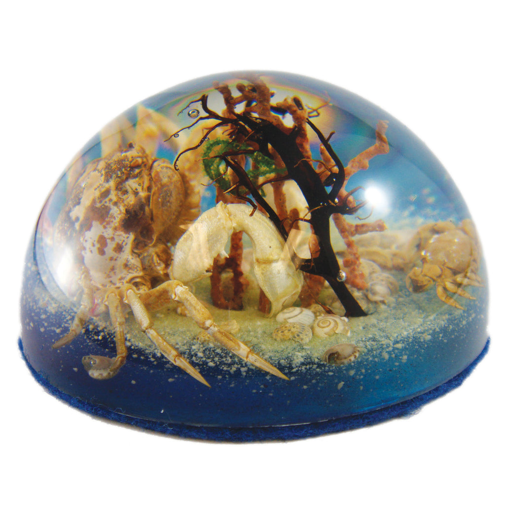 Big Crab & Little Crab Dome Paperweight (SS234)