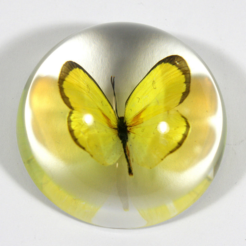 SS380<br/>Grass Yellow Butterfly Dome