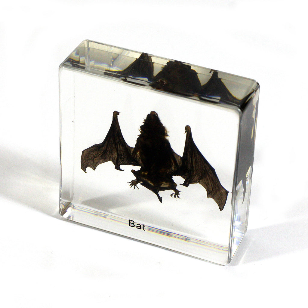 T420S<br />Small Bat Desk Decoration<br />