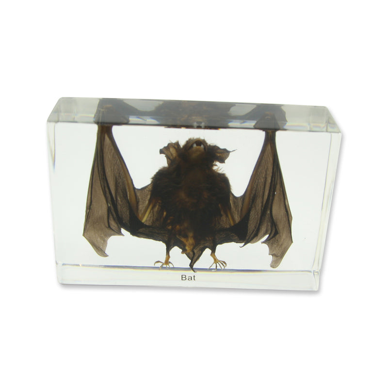 T420<br />Large Bat Desk Decoration<br />
