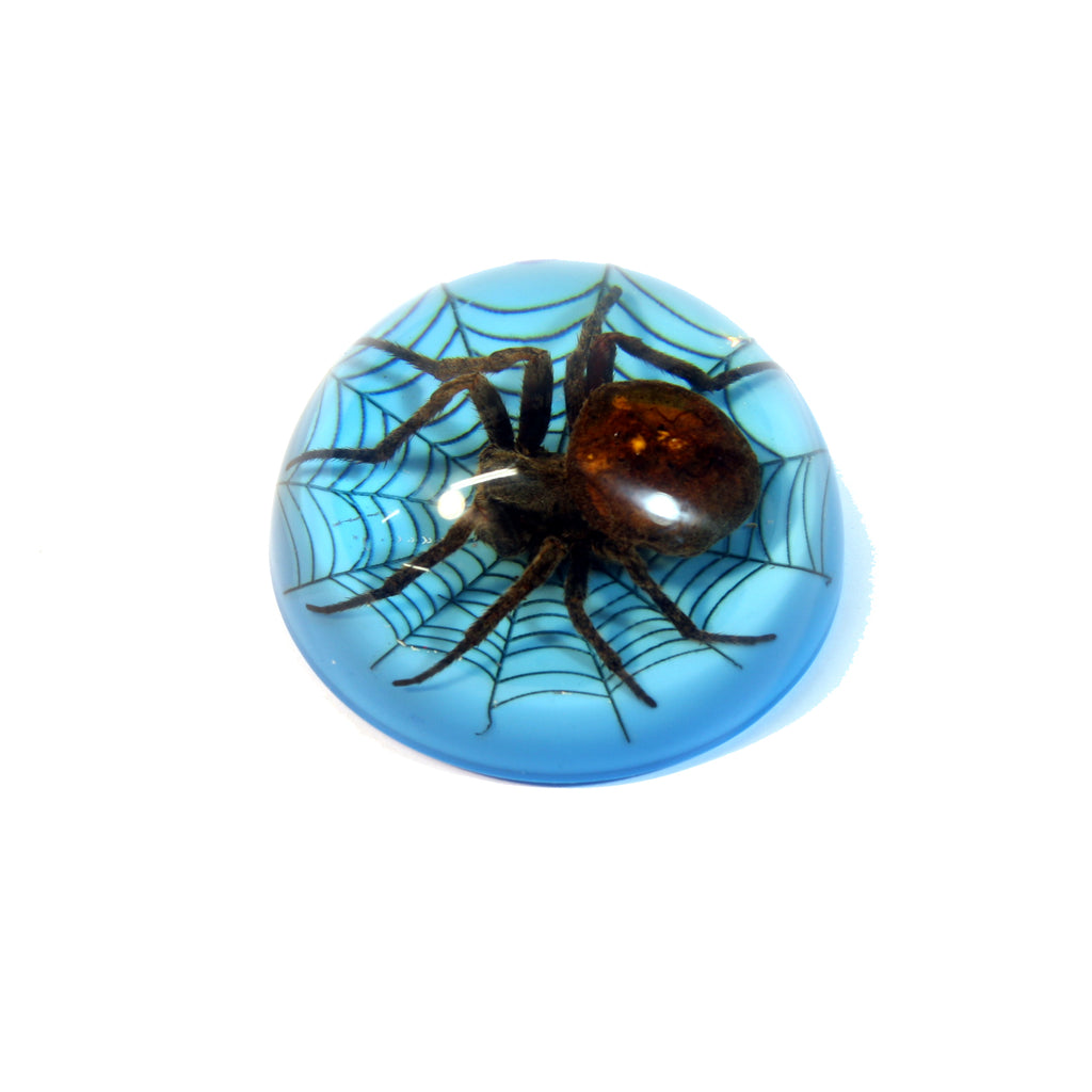 TC215<br/>Spider on Web Dome