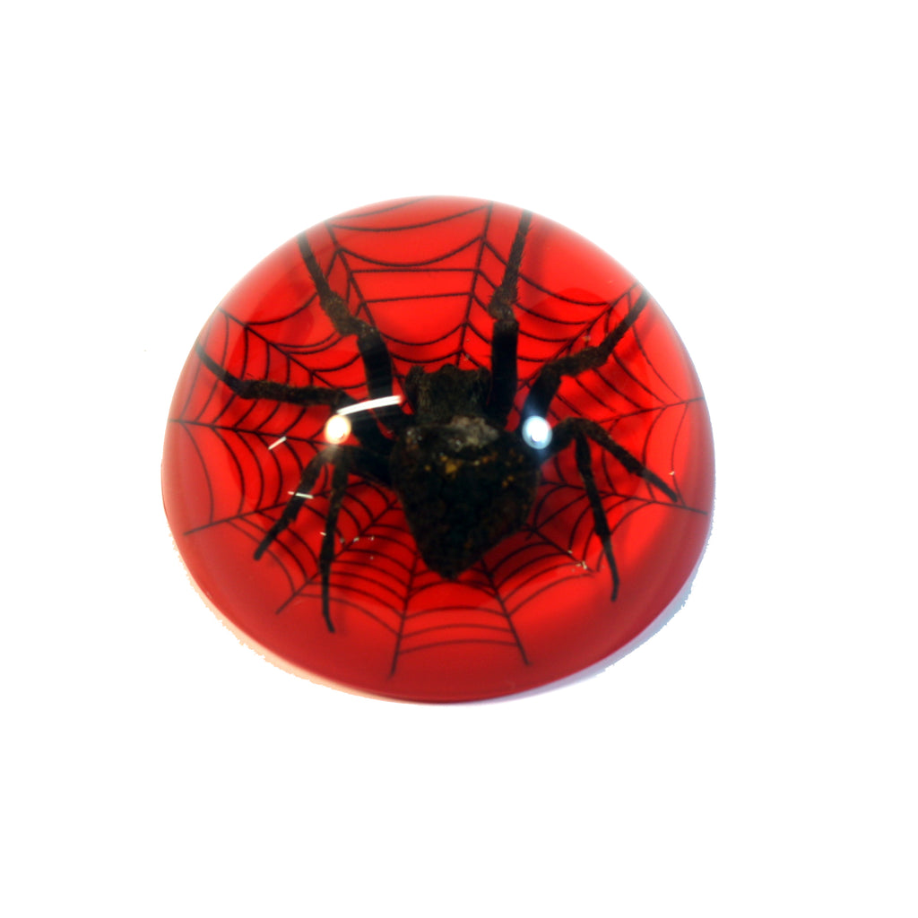 TC216<br/>Spider on Web Dome