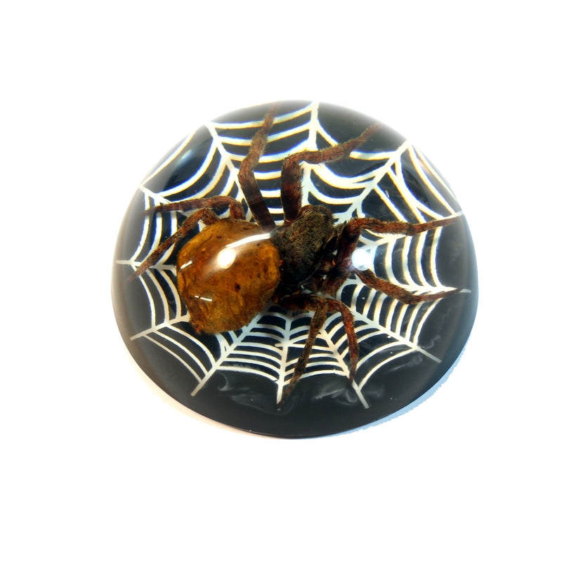 TC217<br/>Spider on Web Dome