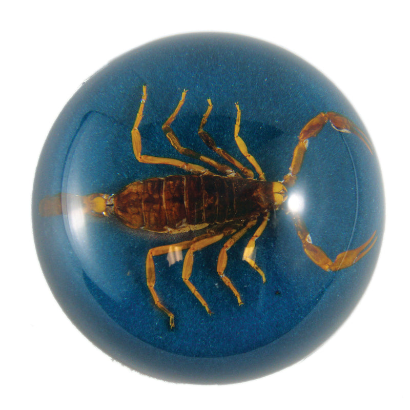 Golden Scorpion Dome Paperweight, Blue (TC404)