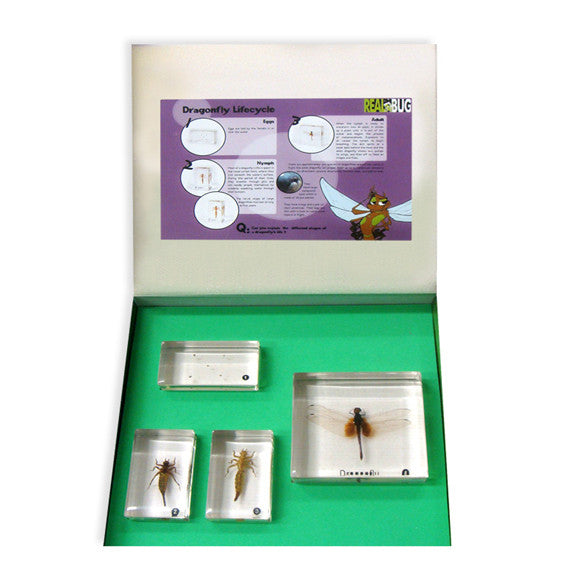 BFK1101<br/>Biology For Kids-Dragonfly Lifecycle