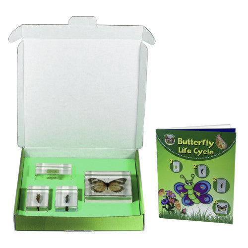 BFK1103<br/>Biology For Kids - Butterfly Lifecylce<br/>