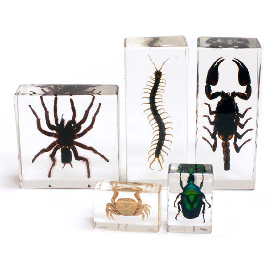 BFK1202<br/>Biology For Kids-Arthropod Collection