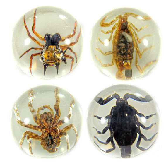 MB2501<br/>4 pc Scorpion & Spider Marble Set