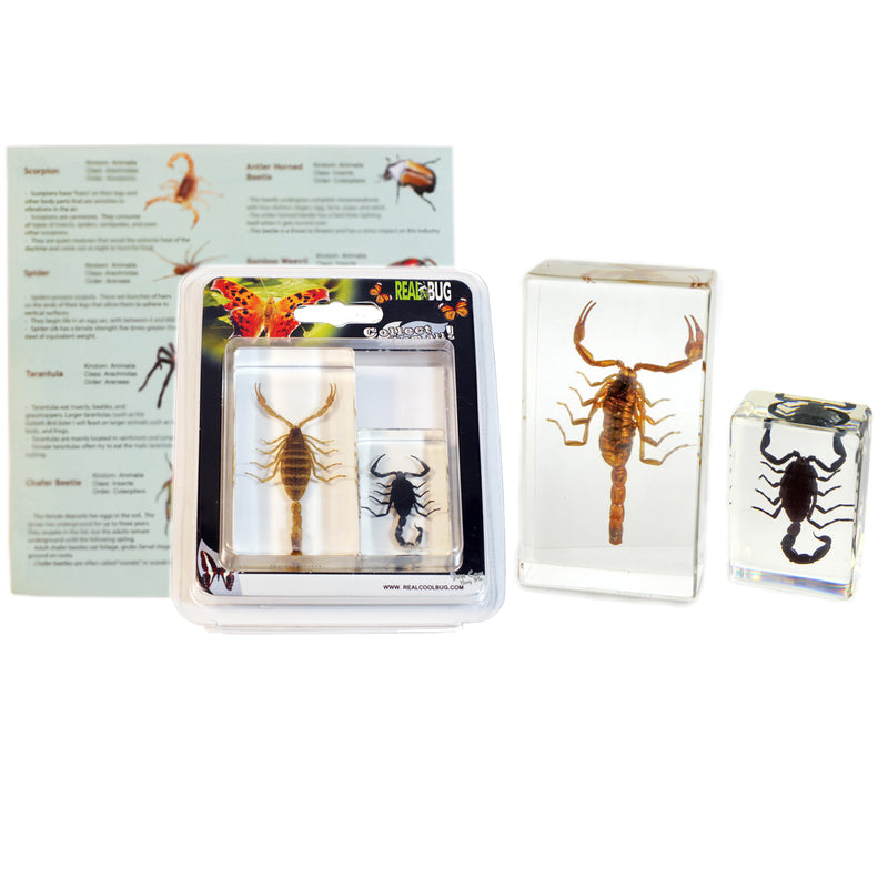 PWC421<br />2 pc Scorpion Paperweights