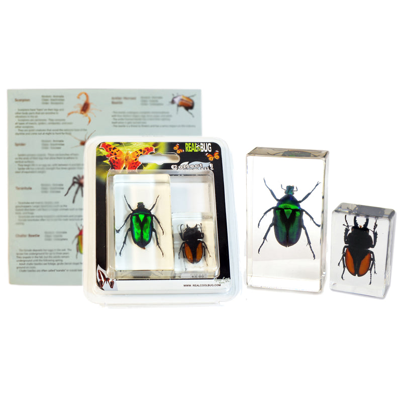 PWC422<br />2 pc Beetles Paperweight