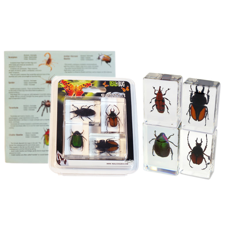 PWC442<br />Beetles 4 Pc Paperweights