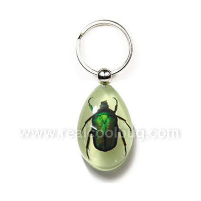 YK606<br />Green Chafer <br />Beetle