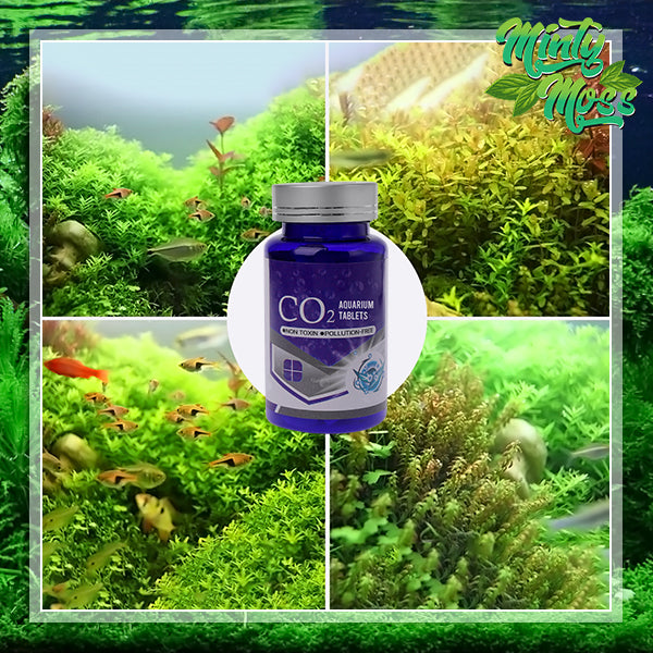 Eco-Friendly CO2 Aquarium Tablets