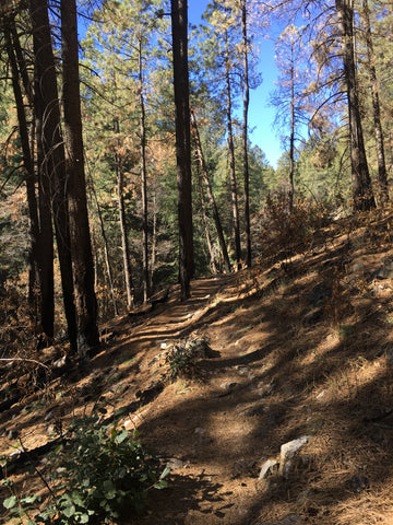 Marshall Gulch trail