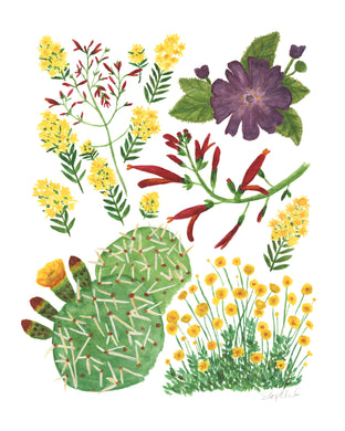 Sonoran Desert Wildflowers 01