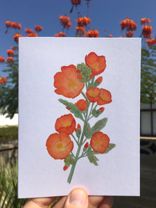 Desert Globe Mallow Greeting Card