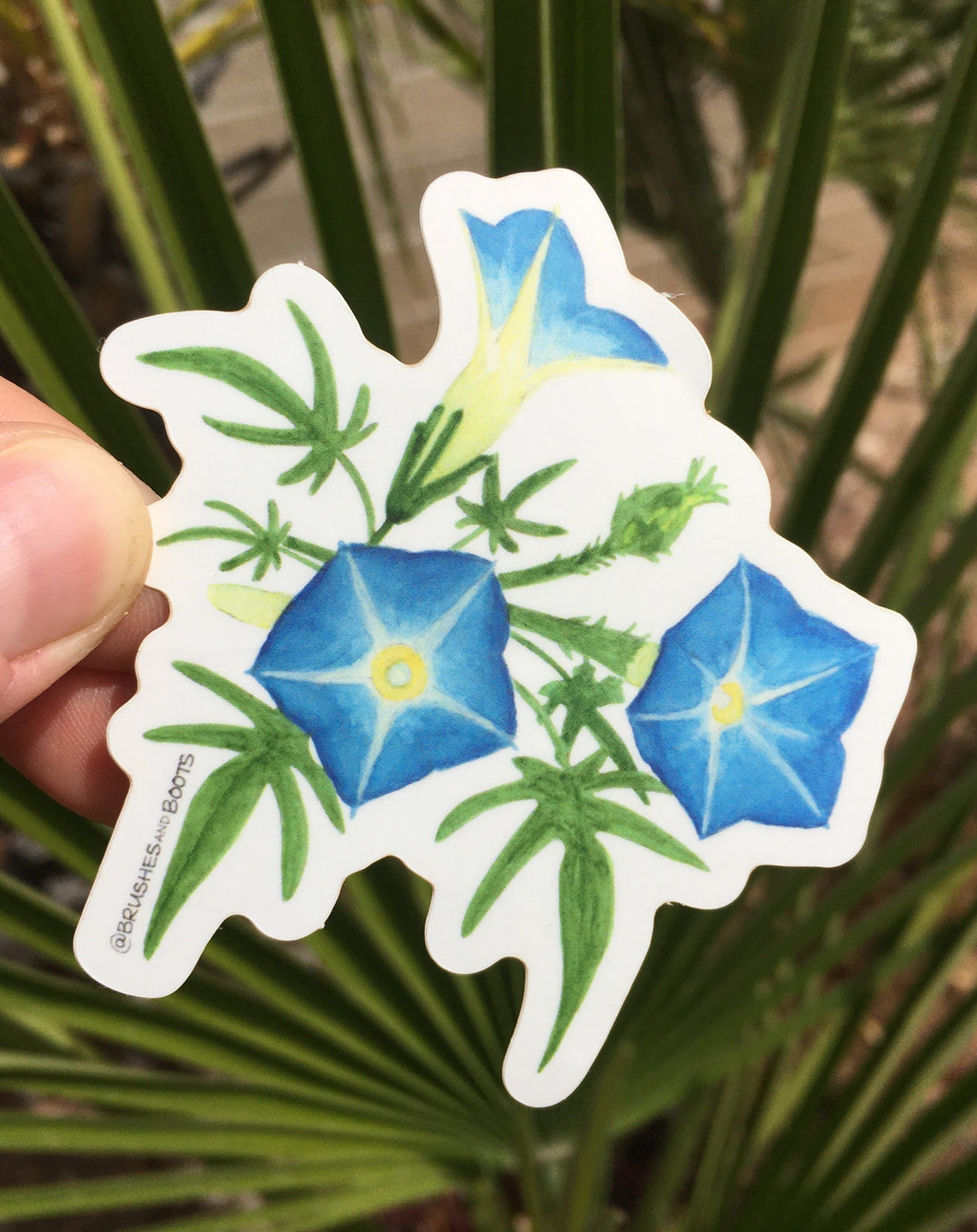 Vinyl sticker of Brushes and Boot's Canyon Morning Glory design - a blue flower found in canyons in the Sonoran Desert
