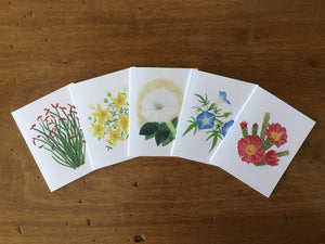 Desert Collection #3 - Greeting Cards (Set of 5)
