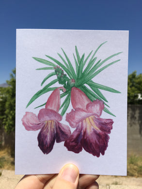 Desert Willow Bloom Greeting Card