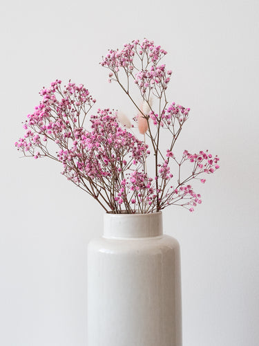 Preserved Baby's Breath - Pink Lace