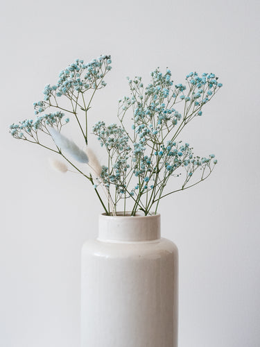 Preserved Baby's Breath - Blue Lace