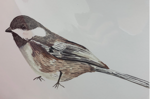 201 ($15) Print - Bird - Chickadee