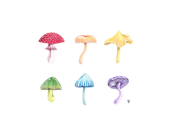 205 ($18) Rainbow Mushrooms