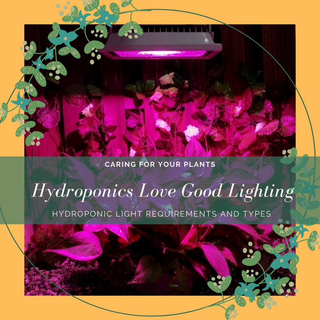 TYPES AND REQUIREMENTS OF LIGHTING FOR HYDROPONICS: A COMPLETE GUIDE