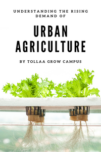 What is Urban Agriculture: How Can It Help Feed Cities?