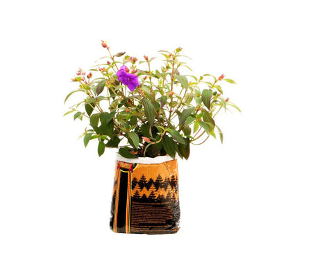 Royal Gold Tupur, .75 cu ft (5 gallon plant in bag)