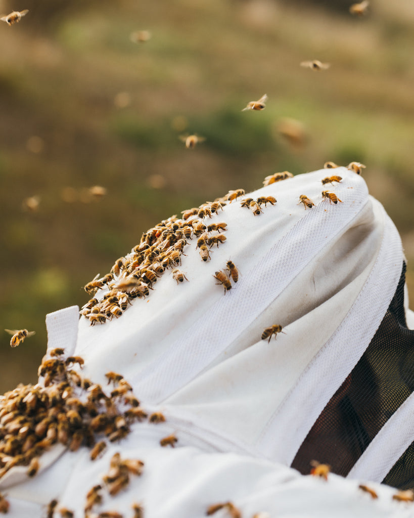taylor pass honey beekeeper new zealand bees on suit