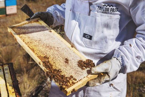 taylor pass honey new-zealand beekeeper beehive honeycomb