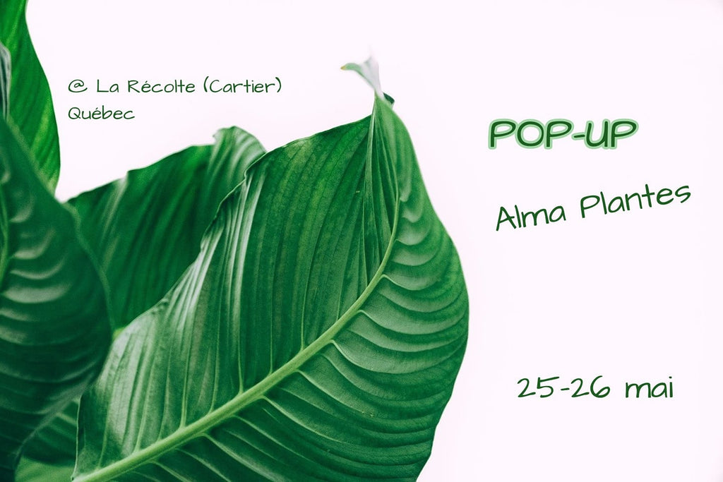 Pop-Up Québec - 25-26 mai