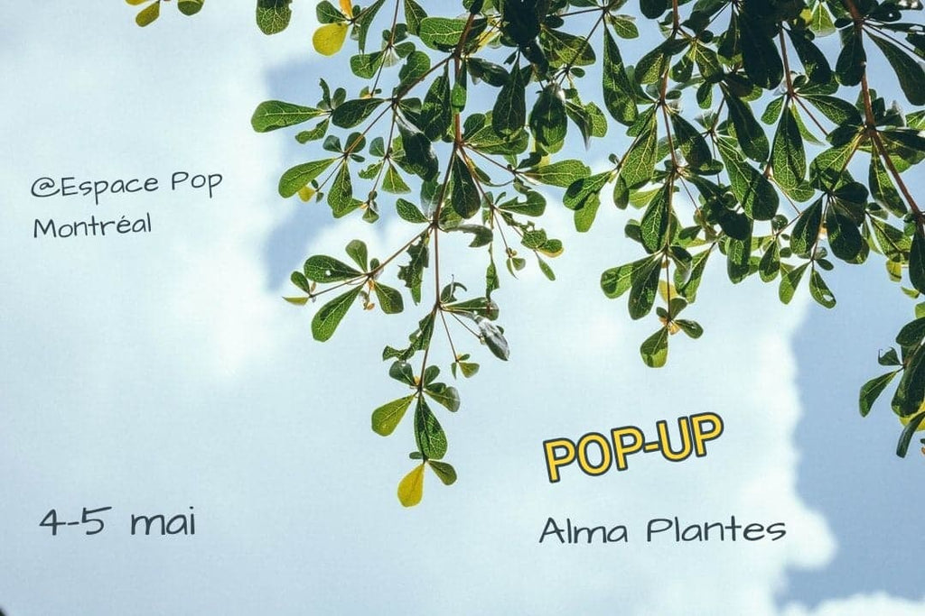 Pop-Up Montréal - 4 & 5 mai