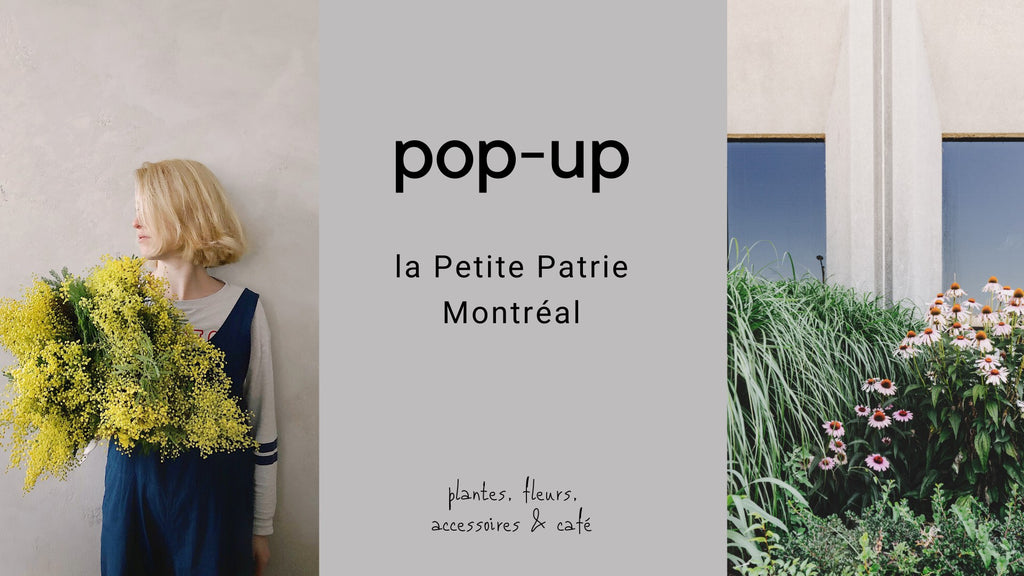 Pop-Up La Petite Patrie (Montreal)