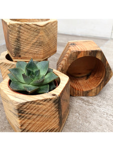 Pot en bois & plante - hexagone