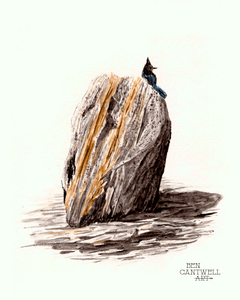 Bird on Rock