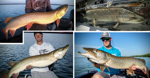 57.25-inch MONSTER – Best Month for Big Fish – Marc Thorpe Thoughts