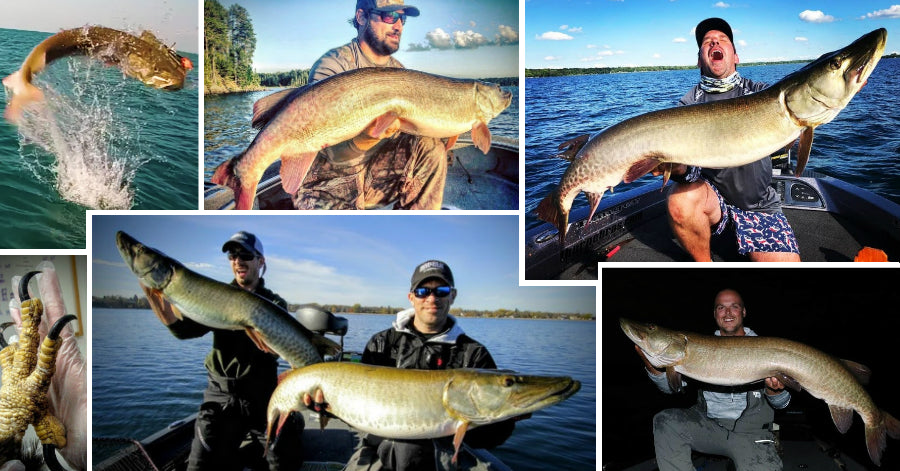 Eagle eats a Musky – Airborne Musky MADNESS – Double-Header Hawgs
