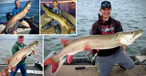 See EVERY Musky Follow? – HUGE 55.5-inch Tourney Fish – Sick Boatside Eat