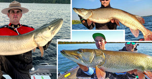53-incher caught TWICE – Musky Science – Awesome Strikes & Sad Losses