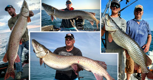 58.5 incher caught – Spencer Berman Tips – Several Massive Musky Pics