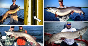 HUGE 56-inch Muskies – Wildest Net Job Ever? – Figure-8 on Side Imaging