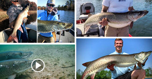 Spawning Musky Vid (UNREAL) – Spring Tips – BIG Muskies from Opener