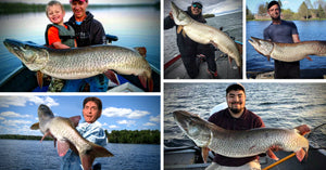 Shore Fishing Musky (Big) – Mayflies=Musky Success – Sneaky Mapping Tips