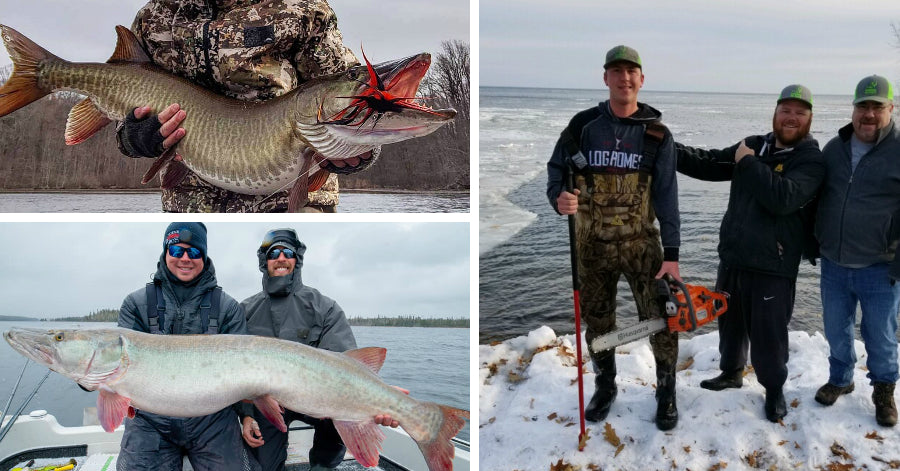 Chainsaws & Muskies – Skinniest Musky Ever? – 54'' Mondo from Shore