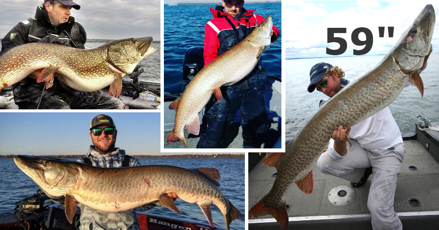 59'' Musky (seriously) – Fall Trollin' Tips – 3 MONSTERS in ONE day